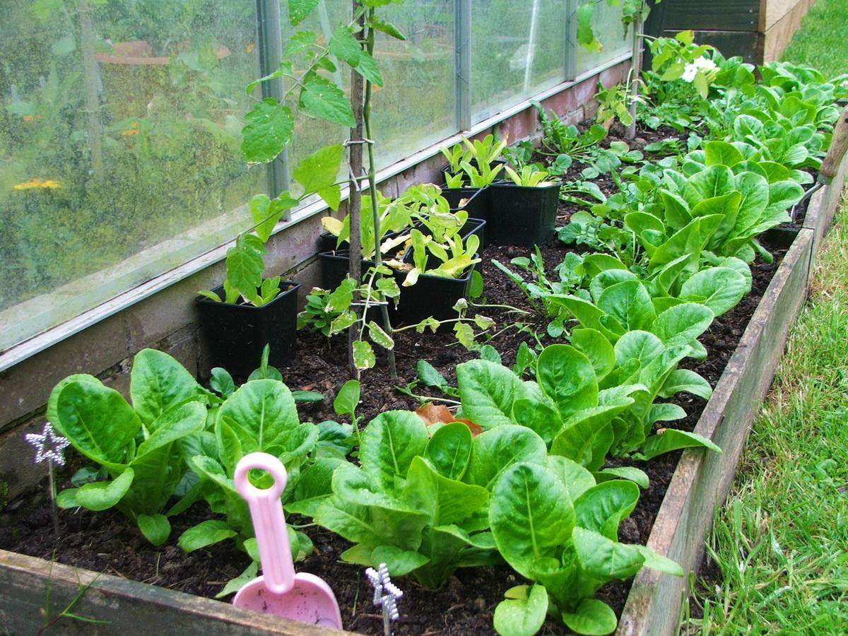 Соседство овощей на грядках: что с чем можно сажать 60